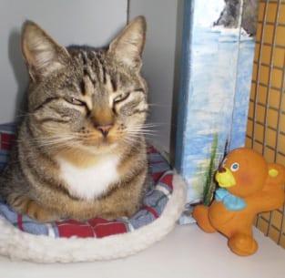 pension feline chat pension pour tous 91 essonne pension pour tous. Black Bedroom Furniture Sets. Home Design Ideas